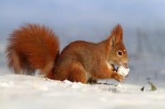 Almoço do inverno Fotografia de Stock