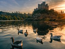 Almourol castle at sunset with wild geese stock image