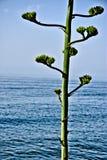 Almuñecar海边在一个晴天4 免版税库存照片