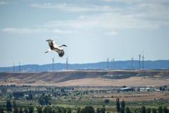 Almudevar (l'Aragona, Spagna): cicogna Immagine Stock Libera da Diritti