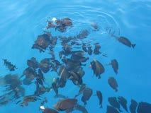 Almuerzo de pescados Imagen de archivo libre de regalías