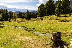 Alm meadow, South Tyrol, Italy stock images