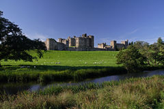 Alnwick Castle. With sheep in the foreground royalty free stock photos