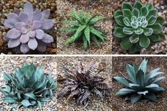 Aloès et collection succulente Images stock