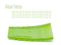 Aloë Vera Stock Fotografie