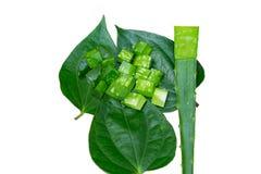 Alo herb Royalty Free Stock Photo