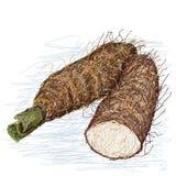 Alocasiadwarsdoorsnede van de taro Royalty-vrije Stock Afbeelding