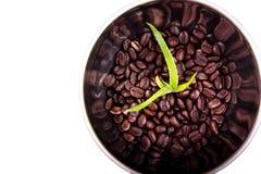 Aloe αναπτύσσει στα φασόλια καφέ Στοκ φωτογραφία με δικαίωμα ελεύθερης χρήσης