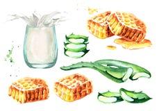 Aloe Βέρα, μέλι και ποτήρι του γάλακτος Συρμένο χέρι σύνολο Watercolor Διανυσματική απεικόνιση