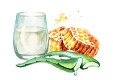 Aloe Βέρα με το μέλι και το γάλα Συρμένη χέρι απεικόνιση Watercolor Διανυσματική απεικόνιση