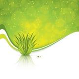Aloe Βέρα Στοκ Εικόνα