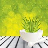 Aloe Βέρα Απεικόνιση αποθεμάτων