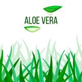 Aloe διάνυσμα της Βέρα φέτες και εγκαταστάσεις Aloe μύλος barbadensis, κάκτος αστεριών, Aloe, Aloin, Jafferabad ή Μπαρμπάντος Στοκ Εικόνες
