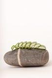 Aloe εγκαταστάσεις της Βέρα στην πέτρα Στοκ Εικόνα