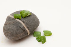 Aloe εγκαταστάσεις της Βέρα στην πέτρα Στοκ εικόνες με δικαίωμα ελεύθερης χρήσης