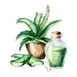 Aloe εγκαταστάσεις vea Συρμένη χέρι απεικόνιση Watercolor Διανυσματική απεικόνιση