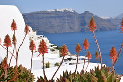 Aloe λουλούδια Στοκ εικόνα με δικαίωμα ελεύθερης χρήσης
