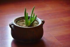 Aloe δοχείο της Βέρα Στοκ Φωτογραφίες