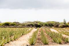 Aloe υπόλοιπος κόσμος 171 Στοκ φωτογραφία με δικαίωμα ελεύθερης χρήσης