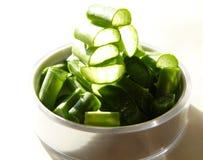 aloe φυτό Βέρα Στοκ εικόνα με δικαίωμα ελεύθερης χρήσης
