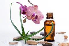 Aloe φύλλο και ορχιδέα με ένα aromatherapy ουσιαστικό πετρέλαιο Στοκ φωτογραφία με δικαίωμα ελεύθερης χρήσης