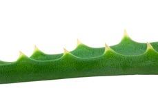 Aloe Royalty Free Stock Photos