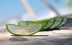 Aloe Stockfotografie