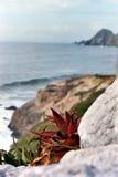 Aloe Immagini Stock