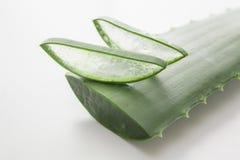 Aloe Royaltyfri Bild