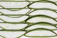 Aloe Royaltyfria Foton