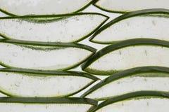 Aloe Arkivbild
