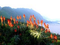 Aloe Stockbild