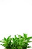 Aloe Fotografie Stock