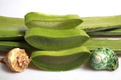 Aloe affettato, isolato su fondo bianco Fotografie Stock Libere da Diritti