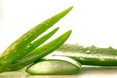 Aloe affettato, isolato su un fondo bianco Immagini Stock