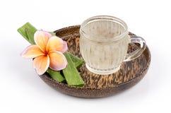 Aloe (aloe vera (L.) Burm.f.) Le erbe della Tailandia hanno proprietà medicinali. Fotografie Stock