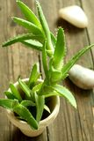 Aloe auf hölzernem lizenzfreies stockfoto
