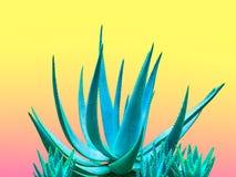 Aloe blu Progettazione di modo della galleria di arte minimo Fotografie Stock Libere da Diritti