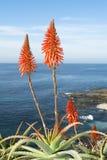Aloe cactus over ocean stock images