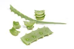 Aloe con le gocce Immagini Stock