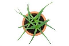 Aloe conservato in vaso Vera Fotografia Stock