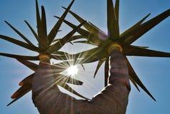 Aloe dell'albero Fotografie Stock