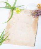 Aloe della pianta da appartamento Fotografia Stock