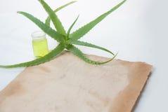 Aloe della pianta da appartamento Fotografie Stock