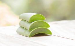 Aloe di erbe Immagine Stock