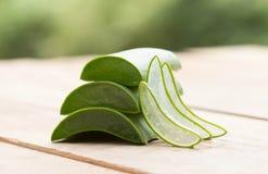 Aloe di erbe Fotografia Stock Libera da Diritti