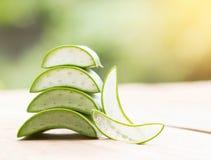 Aloe di erbe Vera Fotografia Stock