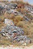 aloe di fioritura nel deserto di Etosha Fotografie Stock Libere da Diritti