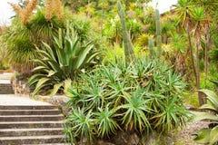 Aloe e cactus Immagine Stock