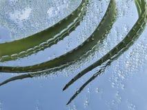 Aloe e cristalli verdi del sale del mare Immagini Stock